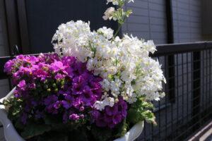 大磯落語茶屋のお花2