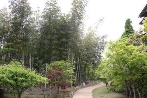 旧吉田茂邸竹林2