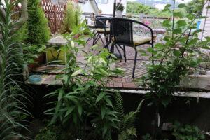 大磯落語茶屋庭のカサブランカ2