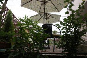 大磯落語茶屋庭のカサブランカ3